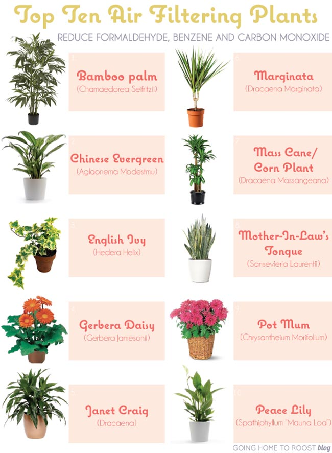 6 house plants that clean your air positivemed - House plant names with pictures ...
