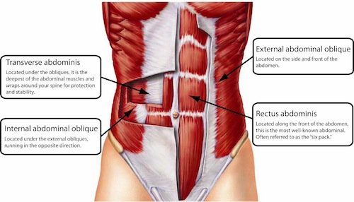 Core-Muscles-anatomy