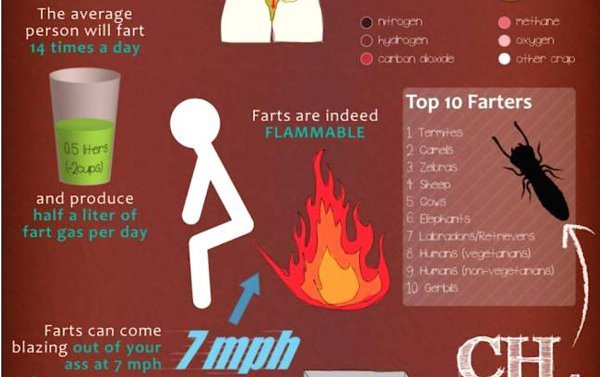 How many times does the average person fart