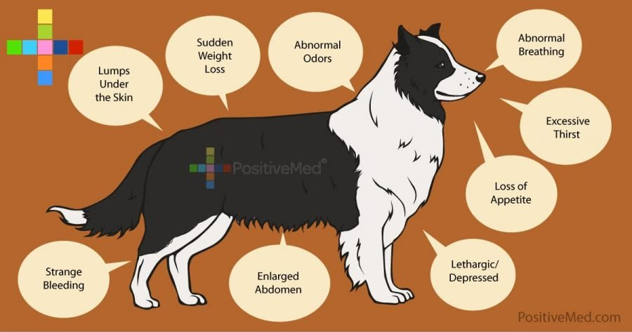 10-warning-signs-of-cancer-in-your-dog