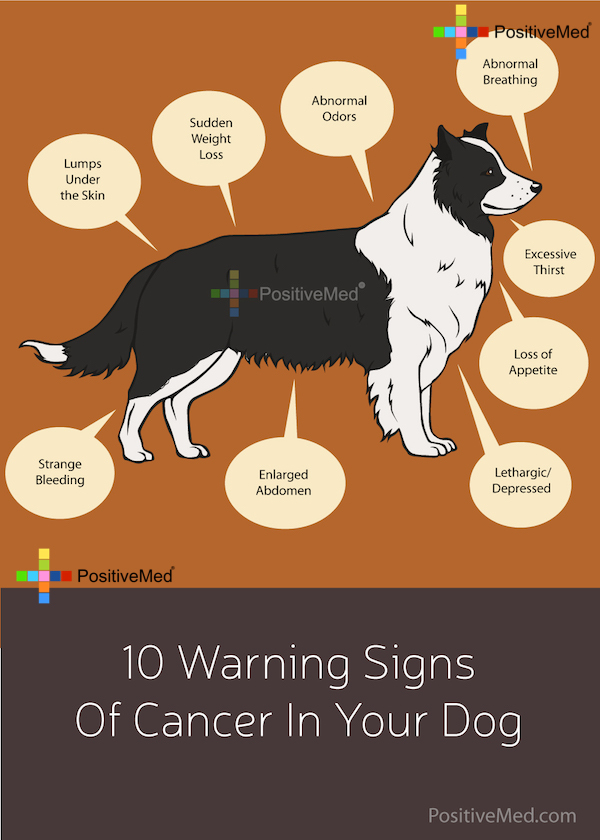 10 Warning Signs Of Cancer In Your Dog