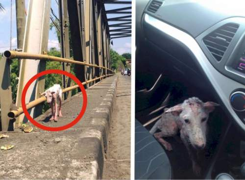 This Poor Dog Jumped Into Someone's Car Out Of Desperation. See What Had Happened After