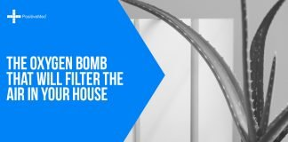 The Oxygen Bomb That Will Filter the Air in Your House