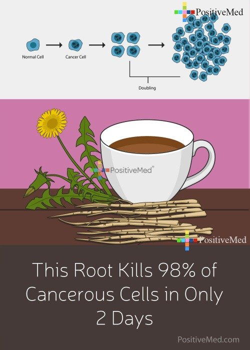 This Root Kills 98 of Cancerous Cells in Only 2 Days