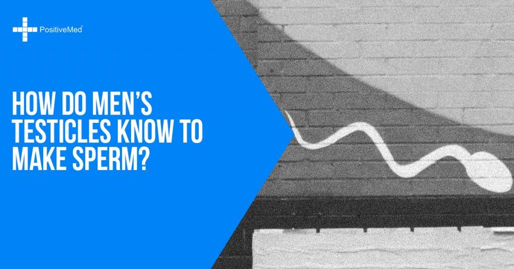 How Do Men's Testicles Know to Make Sperm