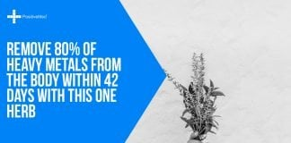 Remove 80% of Heavy Metals from the Body within 42 Days with This One Herb
