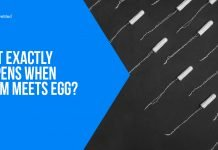 What Exactly Happens When Sperm Meets Egg