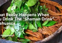 What Really Happens When You Drink The Shaman Drink Ayahuasca