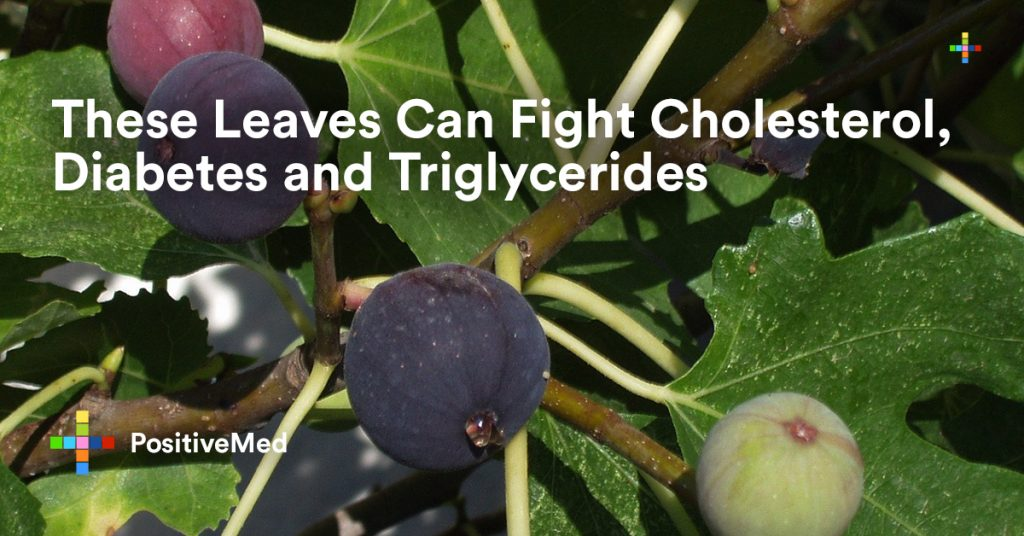 These Leaves Can Fight Cholesterol, Diabetes and Triglycerides.