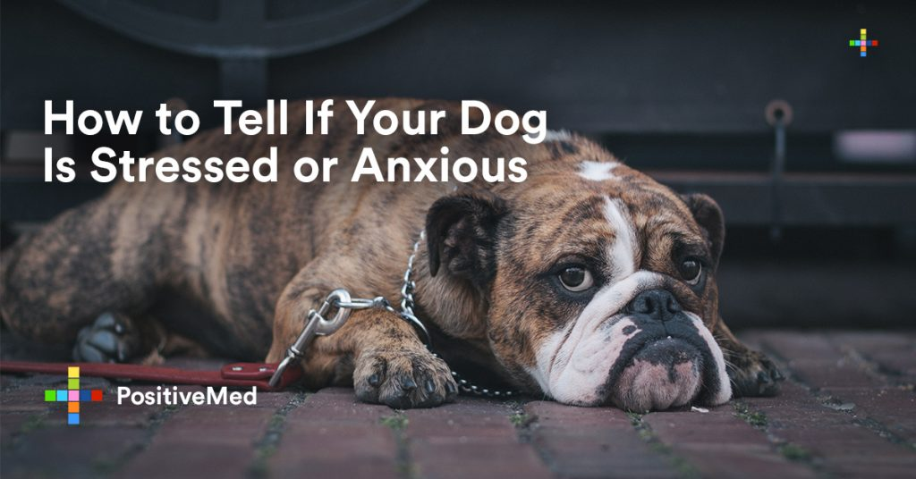 How to Tell If Your Dog Is Stressed or Anxious.