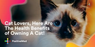 Cat Lovers, Here Are The Health Benefits of Owning A Cat!