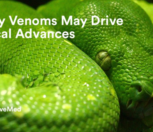 Deadly Venoms May Drive Medical Advances