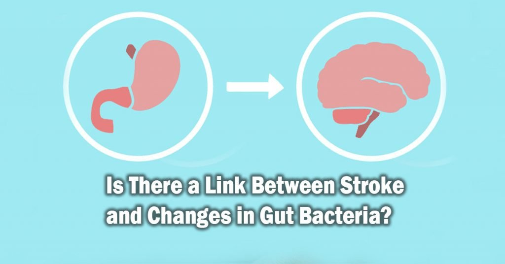 Is There a Link Between Stroke and Changes in Gut Bacteria