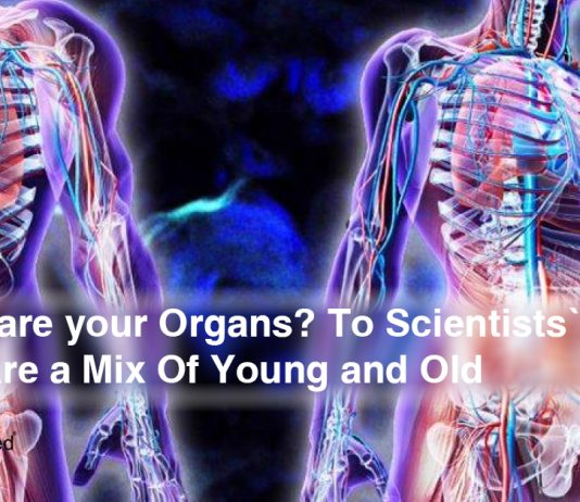 How-Old-are-your-Organs-To-Scientists'-Surprise-Organs-Are-a-Mix-Of-Young-and-Old