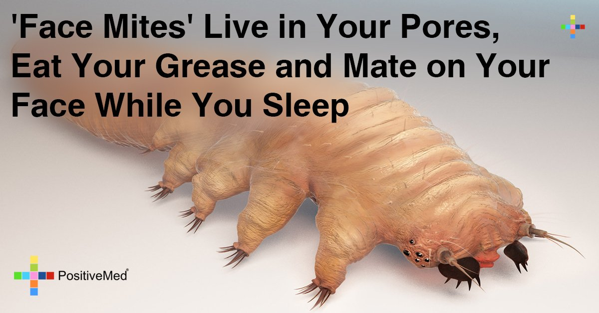 """""""Face Mites"""" Live Inside Your Pores, Eat Grease and Mate On Your Face While You Sleep"""