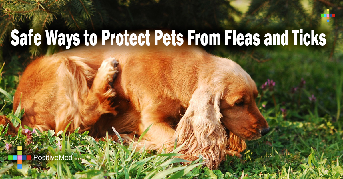 Safe Ways to Protect Pets From Fleas and Ticks